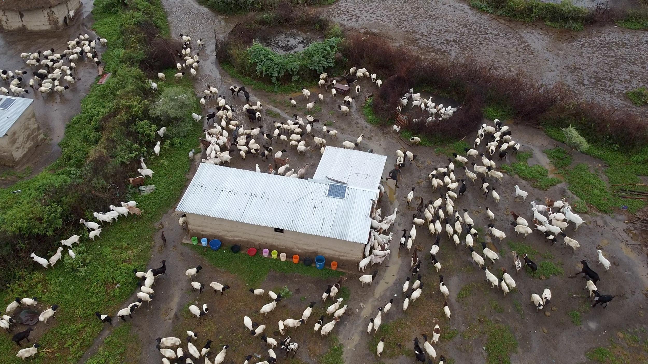 Tejados del poblado masai de Engikareti
