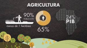 Agriculture in Africa. An indispensable sector to reach the food sovereignty